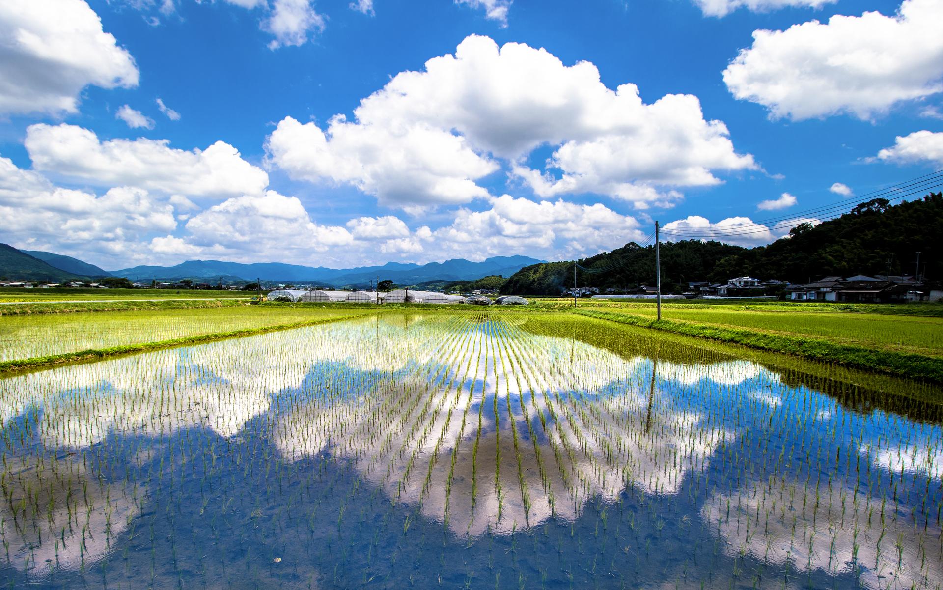 一風変わった、日本ならではの伝承や文化に関する情報をご紹介!!
